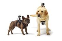 GoPro's Harness Mount Man's Best Friend