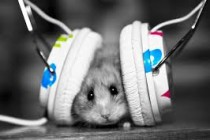 Awesome Ways To Listen To Music With Chinavasion's Headphones