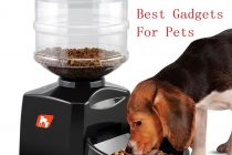 The Best Gadgets For Pets