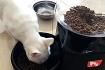 Best Automatic Cat Feeder: Better Look After Your Pet